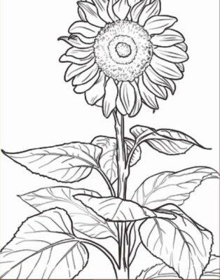 Sketsa Bunga Sederhana