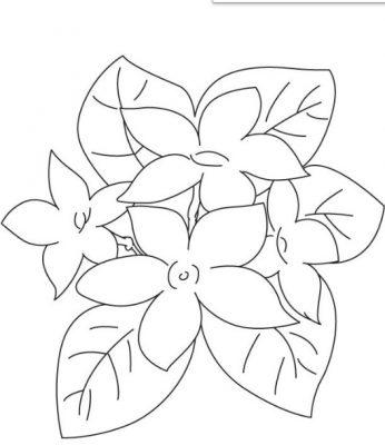 Sketsa Gambar Bunga Kamboja