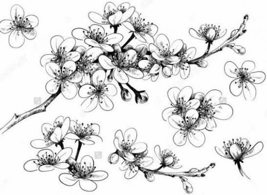 Sketsa Gambar Bunga Sakura