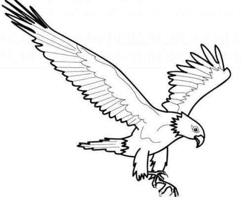 Sketsa Gambar Burung Garuda