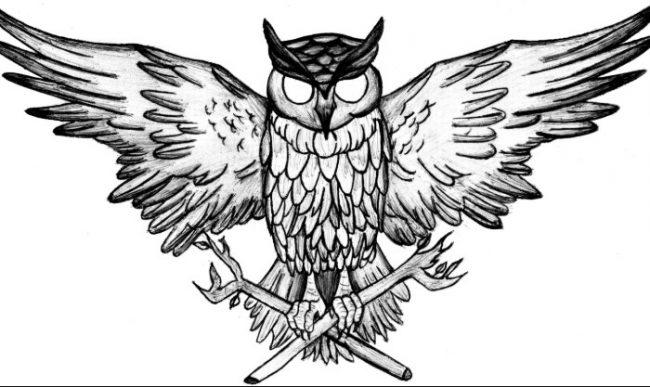 Sketsa Gambar Burung Hantu