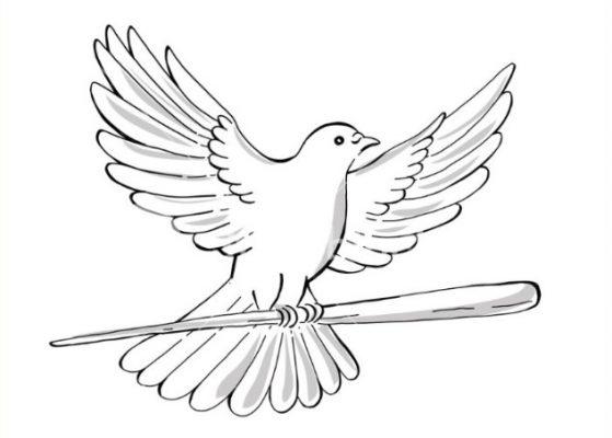 Sketsa Gambar Burung Merpati