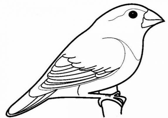 Sketsa Gambar Burung Nuri