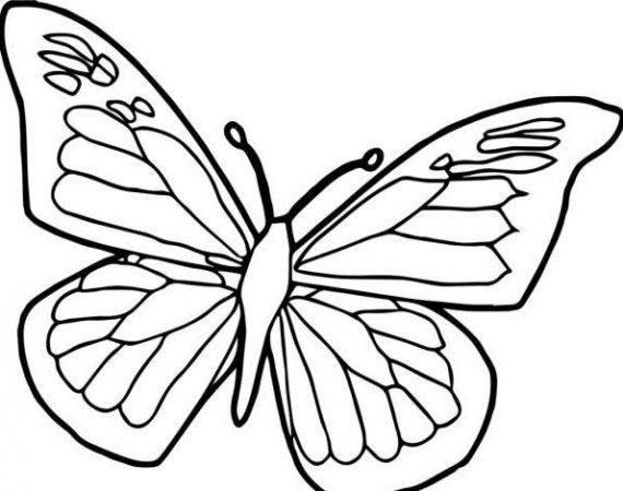Sketsa Gambar Hewan Kupu-kupu