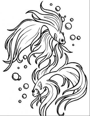 Sketsa Gambar Ikan Hias
