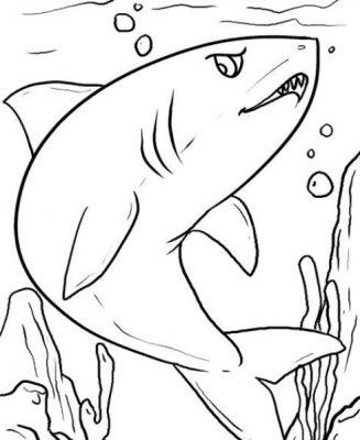 Sketsa Gambar Ikan Hiu
