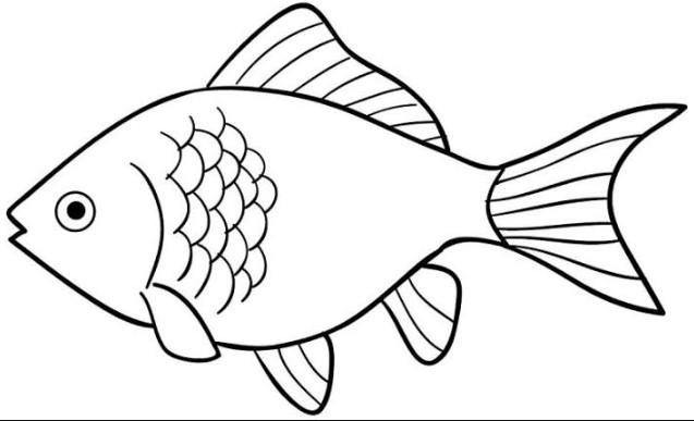 Sketsa Gambar Ikan Mas