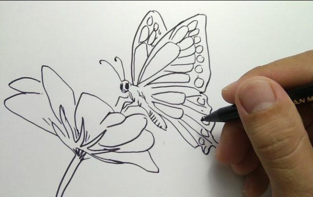 Sketsa Gambar Kupu - kupu