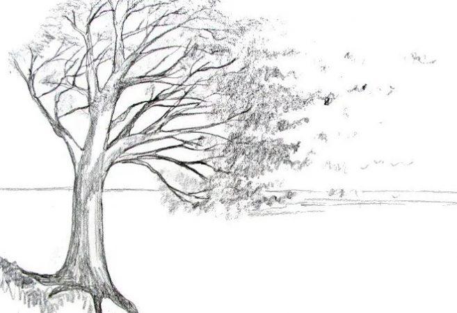 Sketsa Gambar Pohon Simple