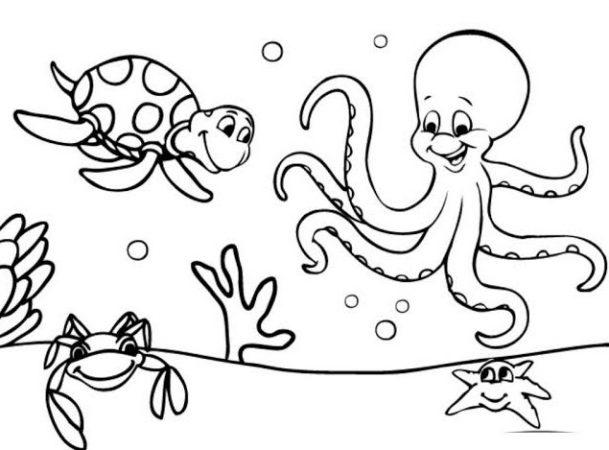 Sketsa Hewan Laut