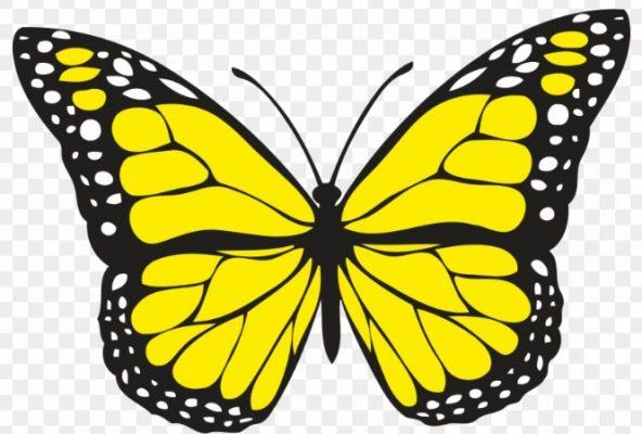 Sketsa Kupu-Kupu Yellow Swallowtail