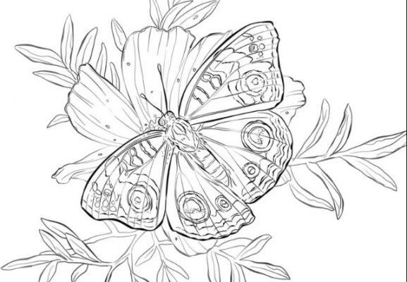 Sketsa Kupu-kupu Hinggap