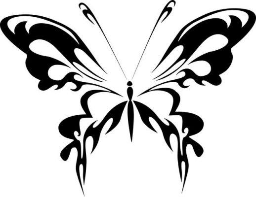 Sketsa Kupu-kupu dari Samping
