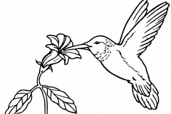 Sketsa gambar burung